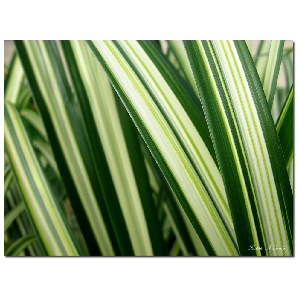 Kathie McCurdy 'Colors of Green' Canvas Art