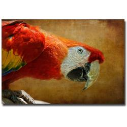 Lois Bryan 'Colorful Bird' Unframed Canvas Art