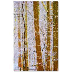 Kathie McCurdy 'Rainbow Woods' Medium-Sized Canvas Art