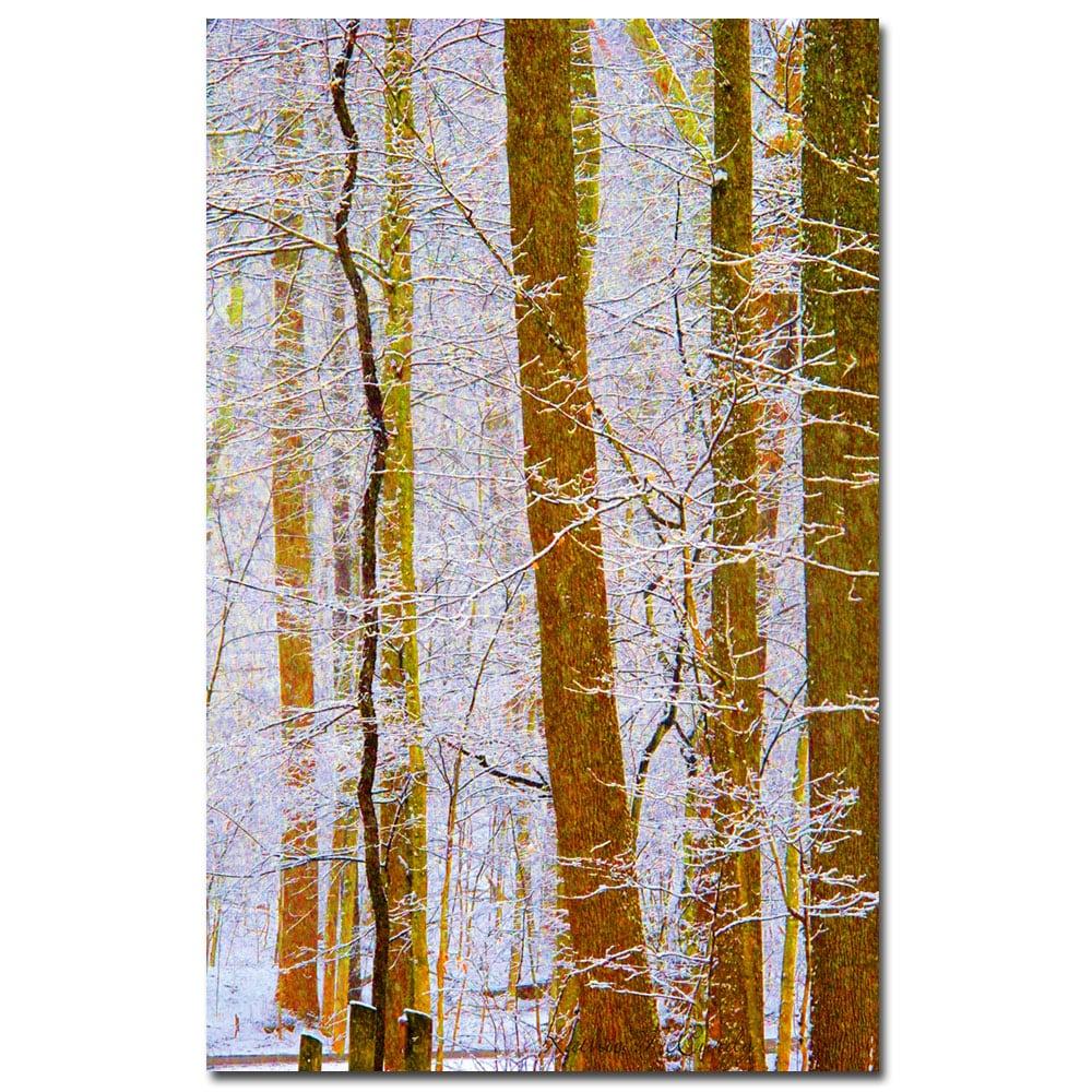 Kathie McCurdy 'Rainbow Woods' Canvas Art