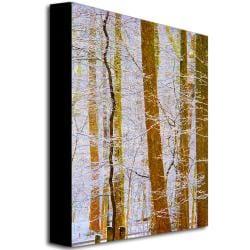 Kathie McCurdy 'Rainbow Woods' Canvas Art - Thumbnail 1