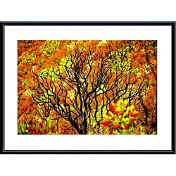 John K. Nakata 'Charred Tree' Metal Framed Art Print