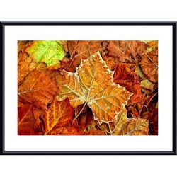 John K. Nakata 'Frost on Leaf' Metal Framed Art Print