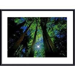 John K. Nakata 'Forest Canopy' Metal Framed Art Print