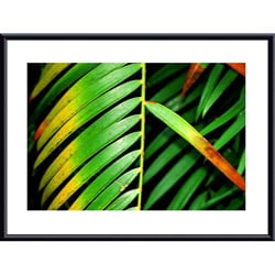 John K. Nakata 'Colorful Palm Leaf' Metal Framed Art Print