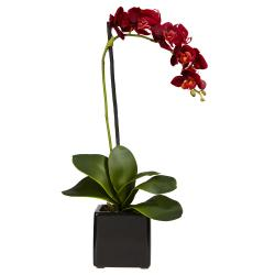 Phaleanopsis Orchid with Black Vase (Set of 2) - Thumbnail 1