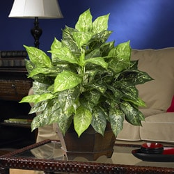 Variegated Dieffenbachia with Large Hexagon Polyester Plant