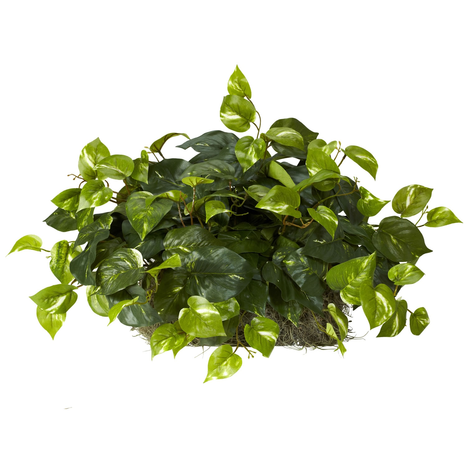 Pothos Ledge Plant Set on Foam Silk Plant
