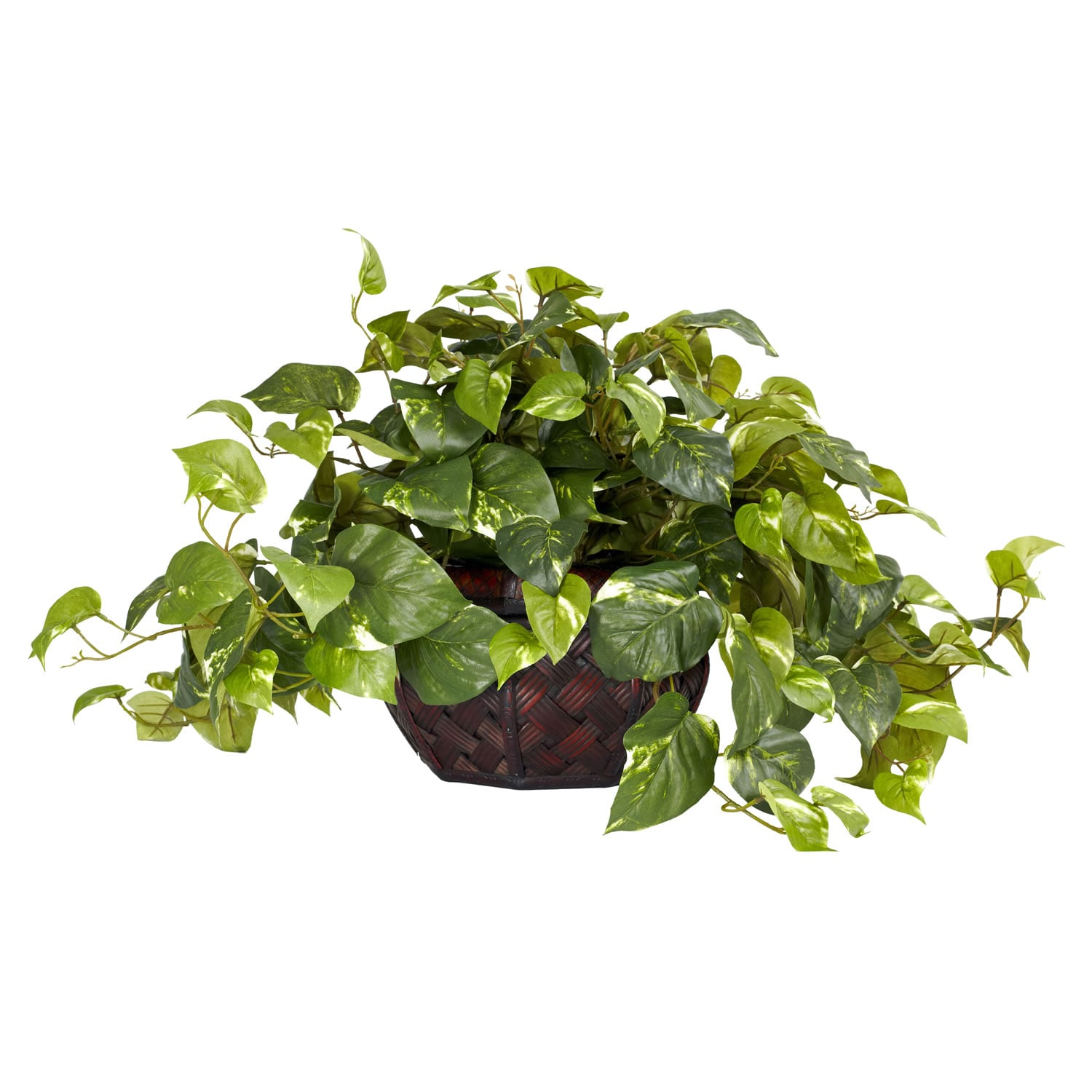 Pothos with Decorative Planter - Thumbnail 0
