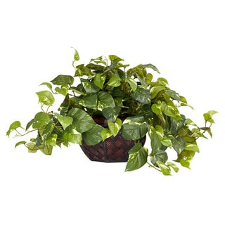 Pothos with Decorative Planter