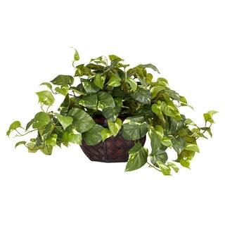 Pothos with Decorative Planter