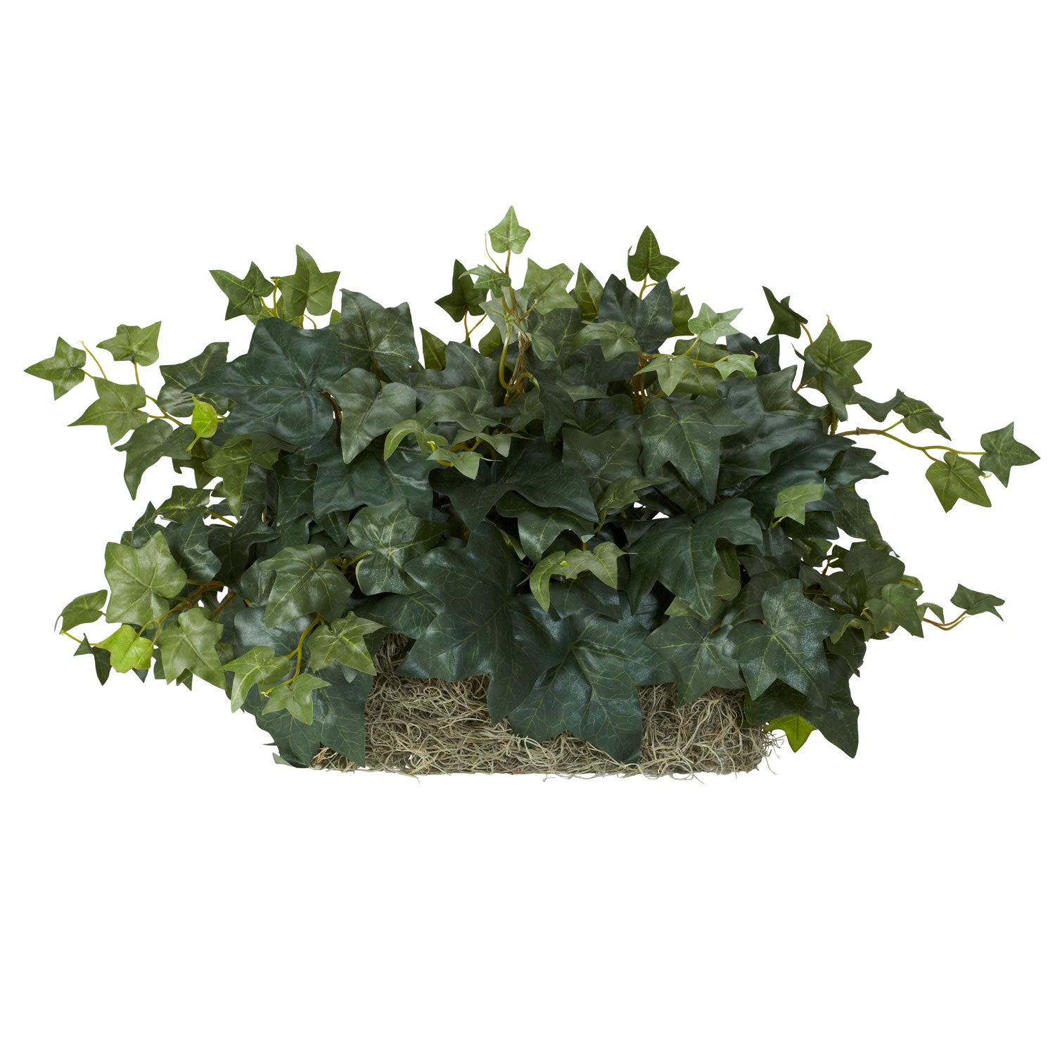 Ivy Ledge Silk Plant - Free Shipping On Orders Over $45