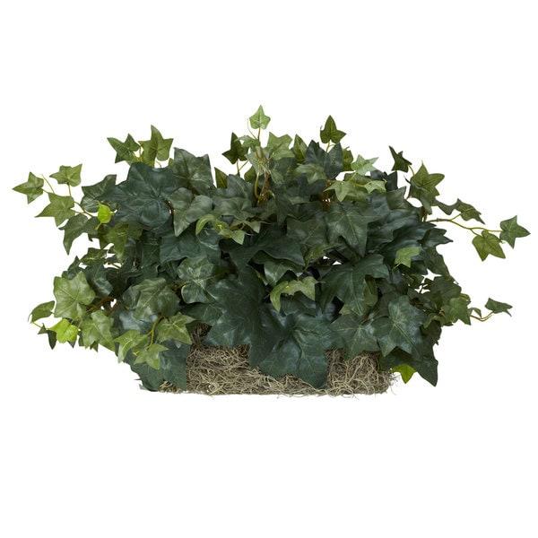 Ivy Ledge Silk Plant