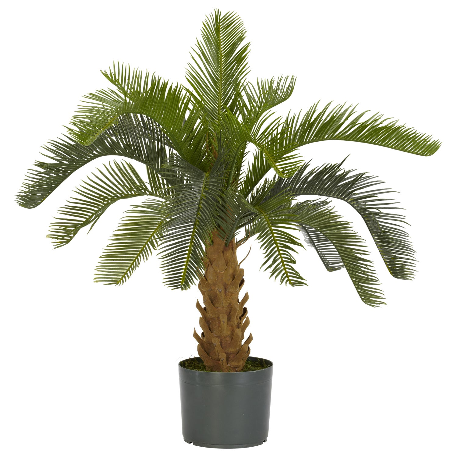 Cycas Palm Silk Plant Free Shipping Today Overstock