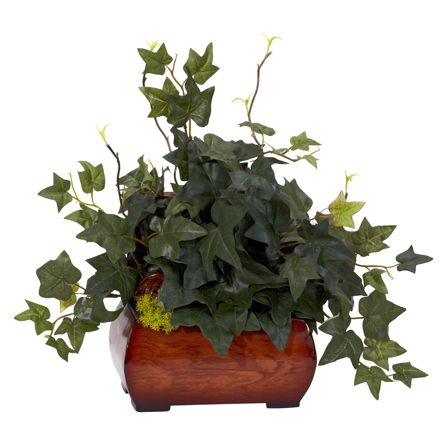 Puff Ivy with Chest Silk Plant