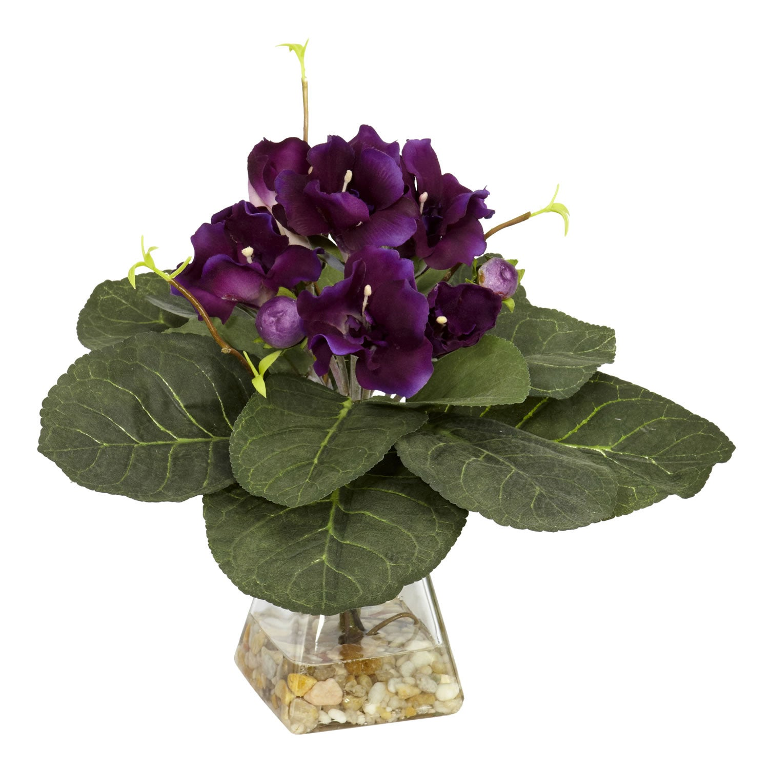 The whimsical beauty is gloxinia. Planting and care