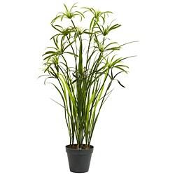 Papyrus Silk Plant (3 feet)