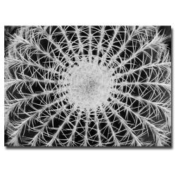 Kurt Shaffer 'Barrel Cactus' Canvas Art