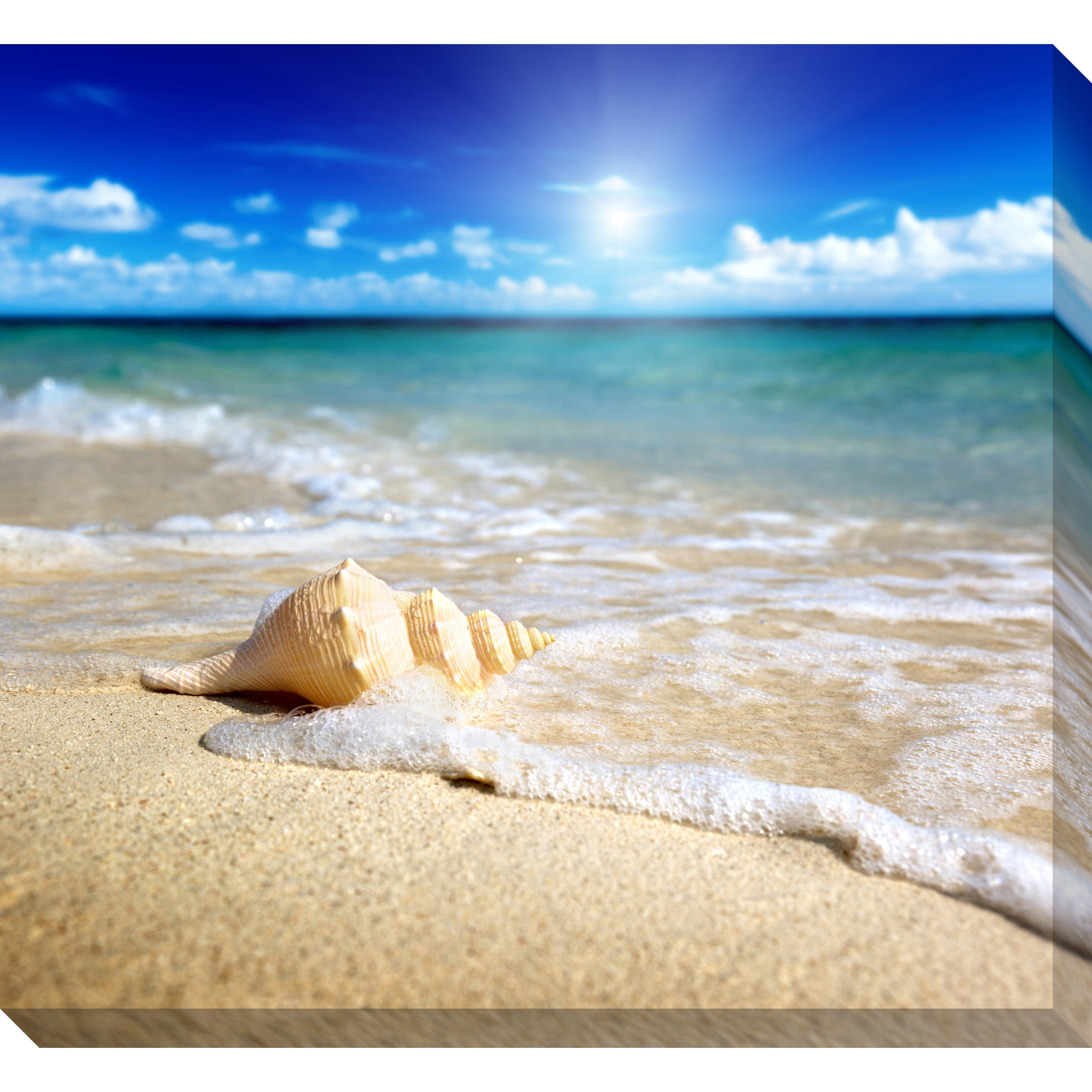 Gallery Direct Seashell on Beach Oversized Gallery Wrapped Canvas
