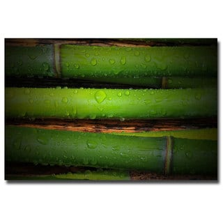Philippe Sainte-Laudy 'Bamboo Drops' Canvas Art