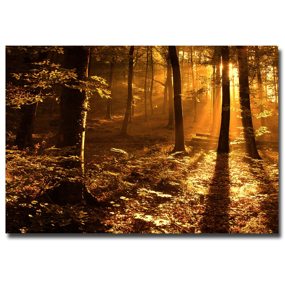 Philippe Sainte-Laudy 'Morning Light' Canvas Art