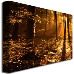 Philippe Sainte-Laudy 'Morning Light' Canvas Art - Thumbnail 1