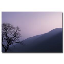 Philippe Sainte-Laudy 'Purple Hours' Canvas Art