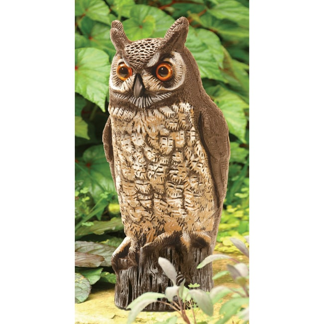 Shop Dalen 16 Inch Molded Owl Painted Free Shipping On