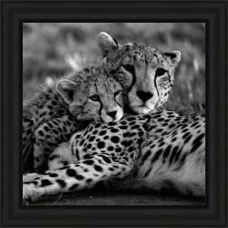 Delimont 'Cheetah With Cub' Framed Print