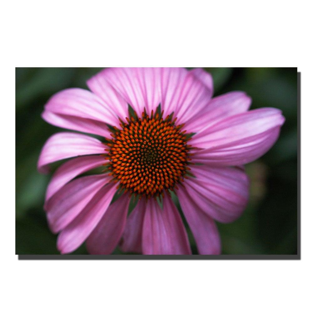 Kurt Shaffer, 'Purple Daisy' Canvas Art