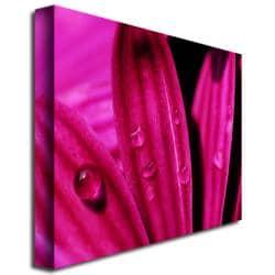 Kurt Shaffer, 'Purple Daisy Macro' Canvas Art - Multi - Thumbnail 0