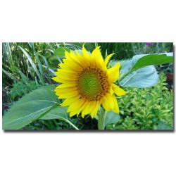 Kathie McCurdy 'Sunflower' Canvas Art