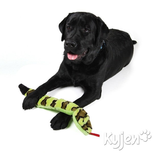 Kyjen Company Invincibles Squeak Snake and Gecko Bundle Dog Toys (Set of 2)