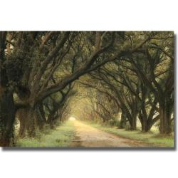 William Guion 'Evergreen Alley' Canvas Art