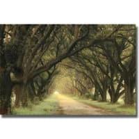 William Guion 'Evergreen Alley' Canvas Art