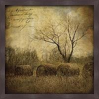 Dawne Polis 'Hayrollers' Framed Print Art