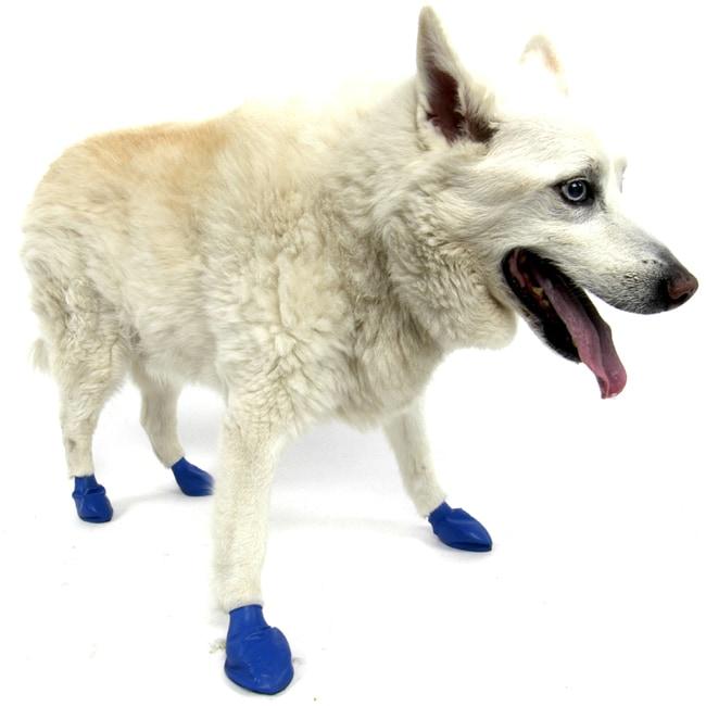 Pawz Blue Medium Weatherproof Protective Dog Boots (Set of 12)