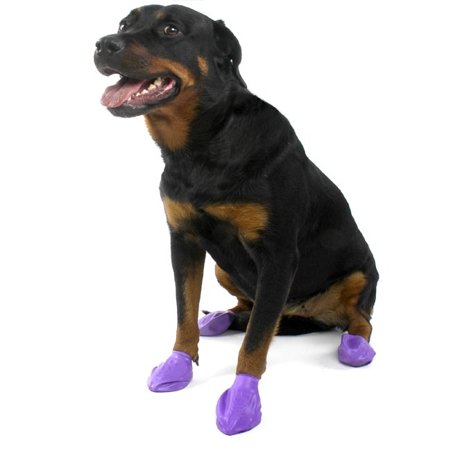 Pawz Large Purple Dog Booties (Pack of 12)
