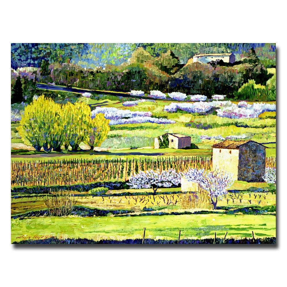 David Lloyd Glover 'Bordeaux Vineyards in Spring' Horizontal Canvas Art