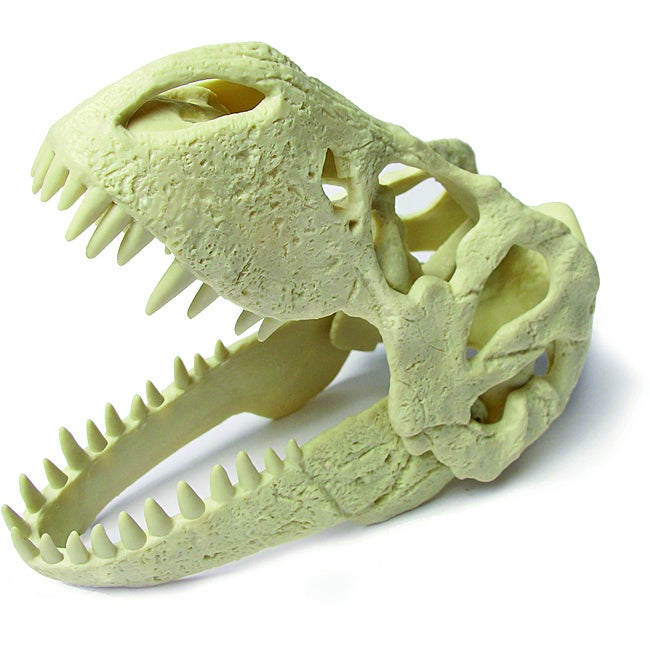 Children's Dino T-Rex Skull Plastic Excavation Kit with Tools