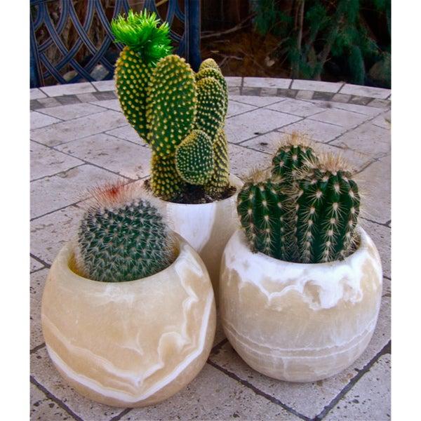 Handmade Natural Round Planter Pots (Egypt)