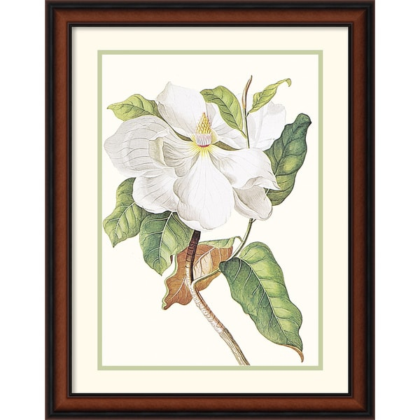 Shop Framed Art Print \'Magnolia Maxime Flore\' by Georg Dionysius ...