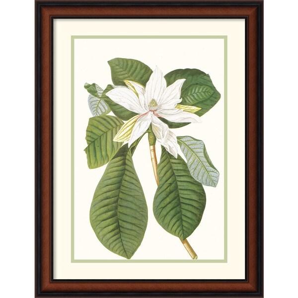 Georg Dionysius Ehret 'Magnolia Folis Oblongis' Framed Art Print