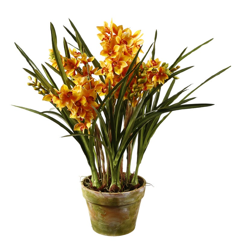 Gold Orchid 47-inch Tall Potted Plant