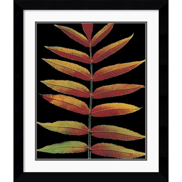 Christopher Griffith 'Staghorn Sumac II' Framed Art Print