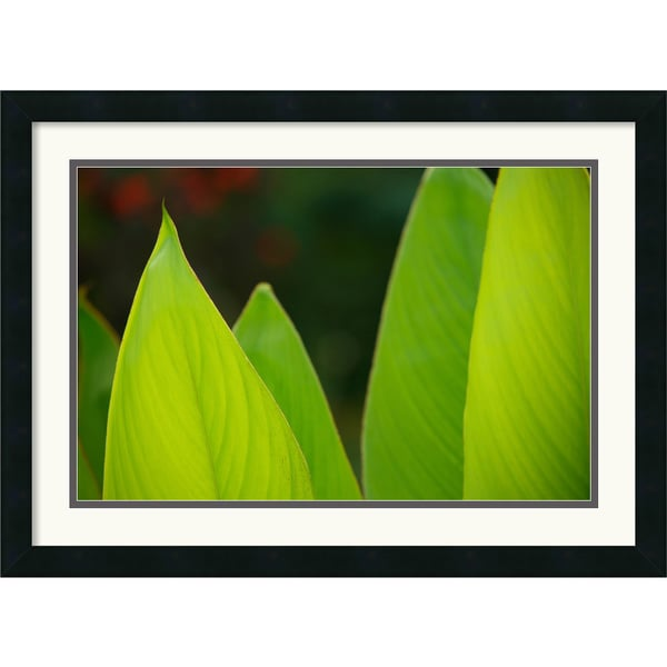 Andy Magee 'Vibrant Green Leaves' Framed Art Print