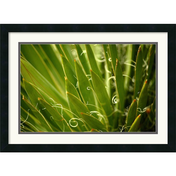 Andy Magee 'Wild Agave' Framed Art Print