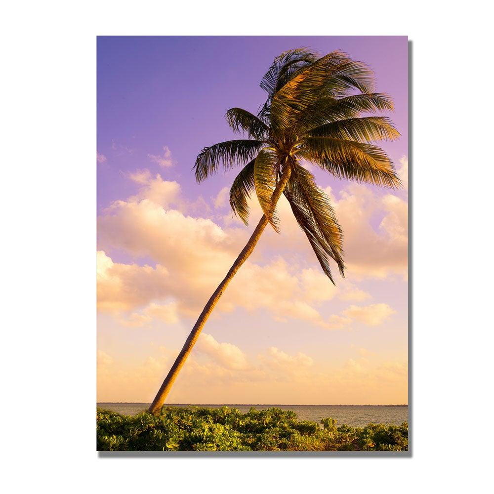 Preston 'Lone Palm' Canvas Art