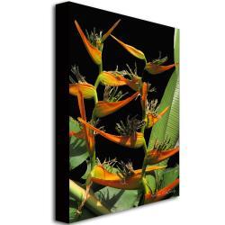 Kathie McCurdy 'Tropical Paradise' Canvas Art - Thumbnail 1