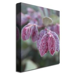 Patty Tuggle 'Dew in the Moning' Canvas Art (Refurbished) - Thumbnail 1